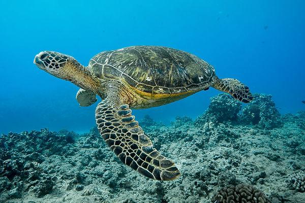 Aloha SCUBA Diving Company PADI 5 Star IDC, Boat Charters, Dive Courses, Snorkeling, and Waikiki Fireworks