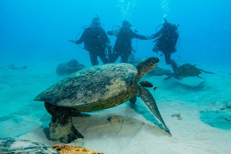 Scuba divers encountering a sea turtle outside Honolulu on Oahu