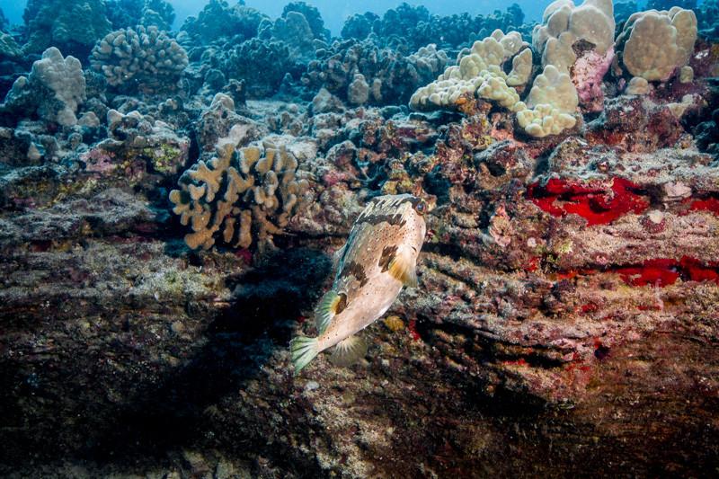 Fantasy Reef dive outside Honolulu on Oahu