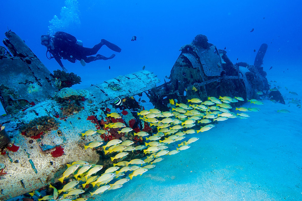 One of our favorite wreck dives, The Corsair, located outside Honolulu on Oahu.