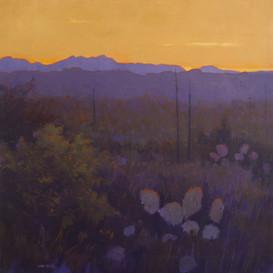 """Sonoran Sunset"""