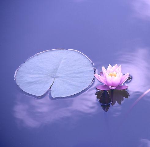 lotus-1205631_1920_edited.jpg