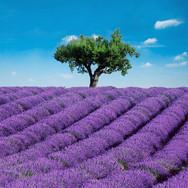 00144_Provence.jpg