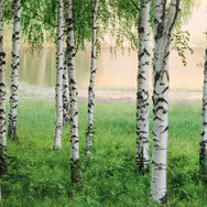 00290_Nordic_Forest.jpg