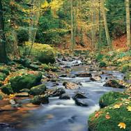 00278_Forest_Stream.jpg
