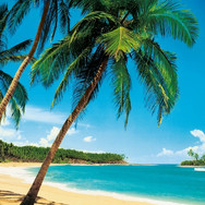 00241_Ile_Tropicale.jpg