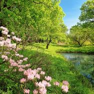 00136_Park_in_the_Spring.jpg