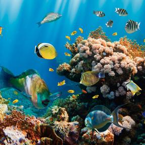 Captura PM tropical fish 360x224 (364x22
