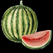 vodní meloun