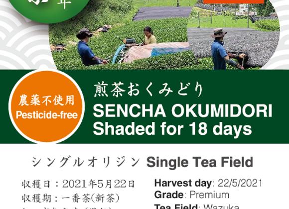 2021 Sencha First Flush: Okumidori - 18 days shaded
