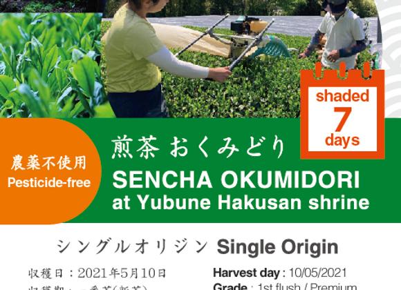 2021 Sencha First Flush: Okumidori - Yubune Hakusan Shrine