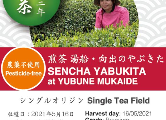2021 Sencha First Flush: Yabukita Mukaide