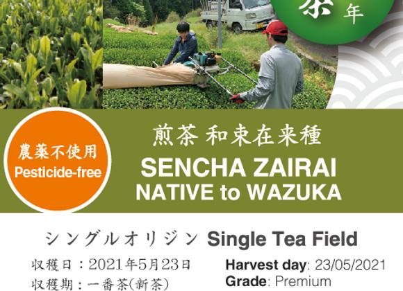 2021 Sencha First Flush: Uji Zairai
