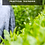 Thumbnail: 2021 Adopt-a-tea-tree bundle
