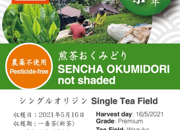 2021 Sencha First Flush: Okumidori - 0 days shaded