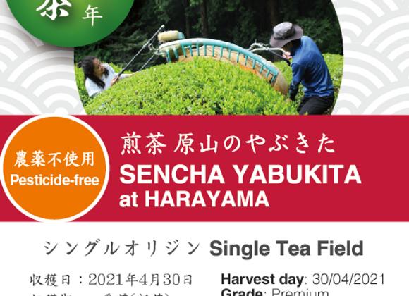 2021 Sencha First Flush: Yabukita - Harayama