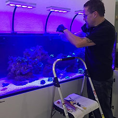 Monte Fragging Coral Placement Maintenance
