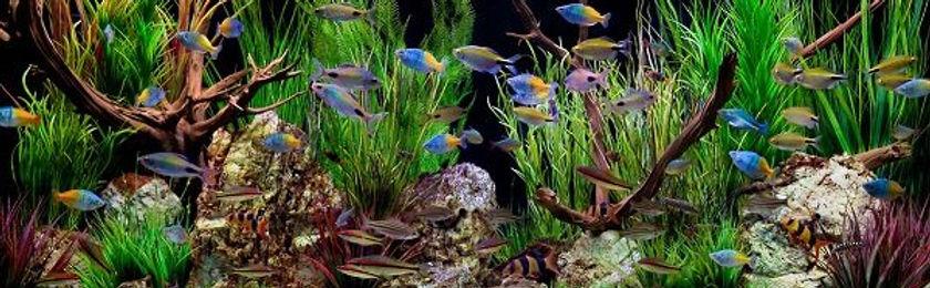 Freshwater Planted Aquarium
