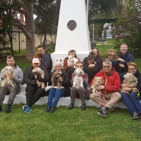 70359896_2404415156306342_18581587166127Dog training melbourne Planet K9