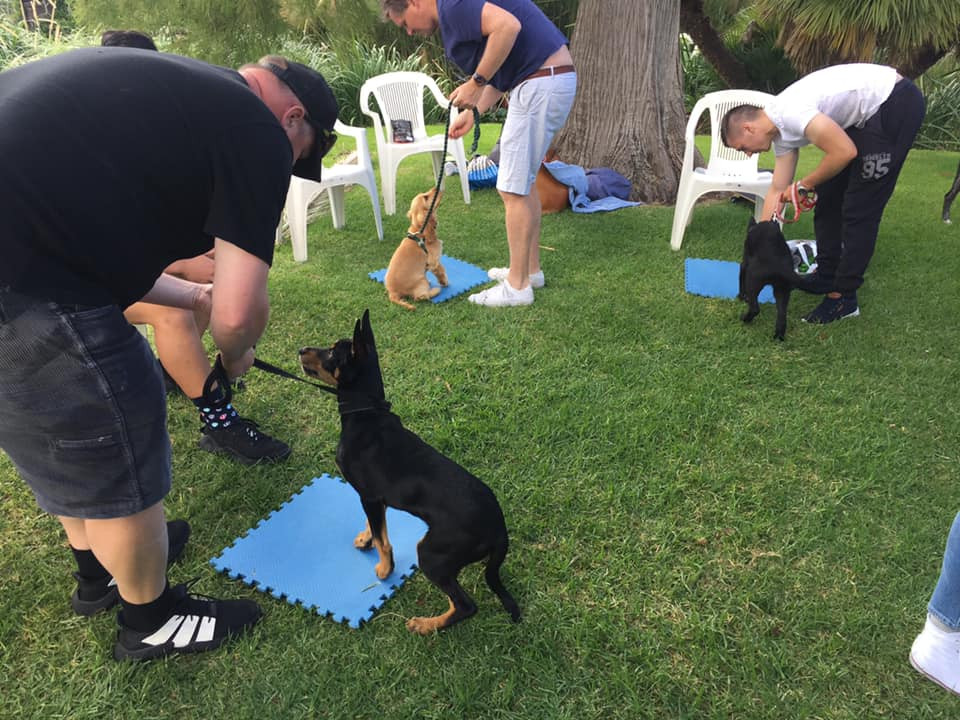 Planet K9 Basic Manners Class69566661869814