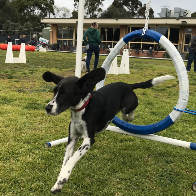 69546945_2380697762011415_21536303002513Dog training melbourne Planet K9
