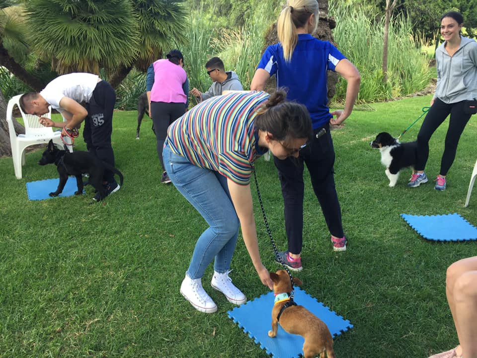 Planet K9 Basic Manners Class8883476781507
