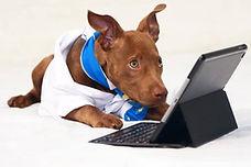 Planet K9 Dog Training Melbourne