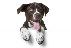 Cute Puppy with paws over white sign.  C