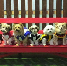 Planet K9's Small Paws Gang