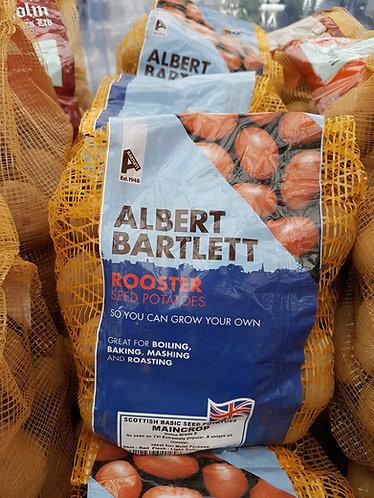 Albert Bartlett Seed Potatoes 'Rooster'