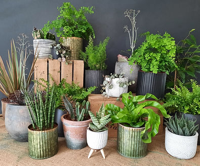 selction of indoor house plants, easy to care for