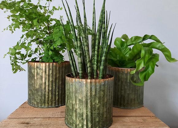 Metallic Plant Can