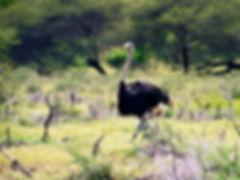 The Casela Safari Challenge