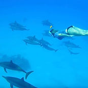 DOLPHINS  EXPEDITIONS