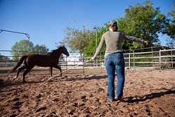 lunging horse in round pen.jpg