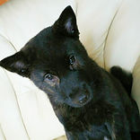 銀谷荘の甲斐犬