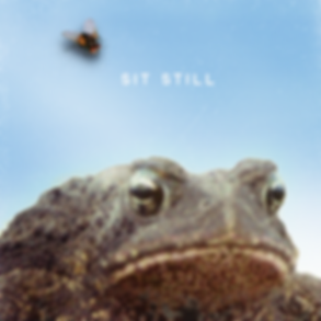sit_still-6-22-19-fly-v2.png