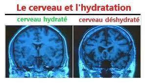 L'hydratation - Le cerveau