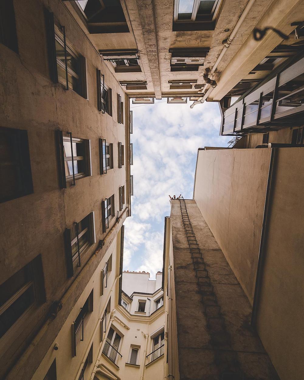Robin au sommet des toits