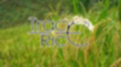 PreviewDSC_4674.jpg