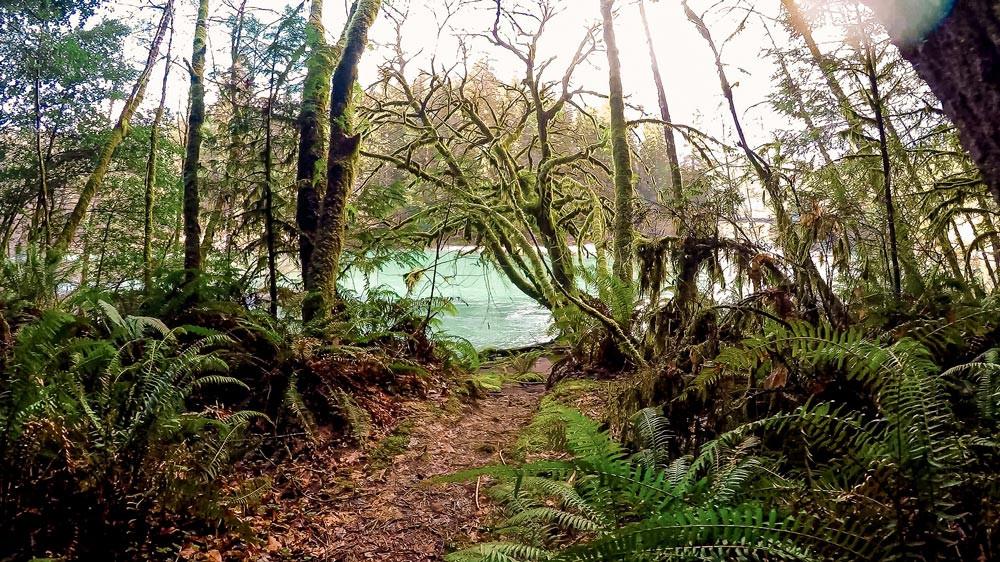Sentier avec beaucoup de végétation menant à une rivière turquoise. Route 199, Californie