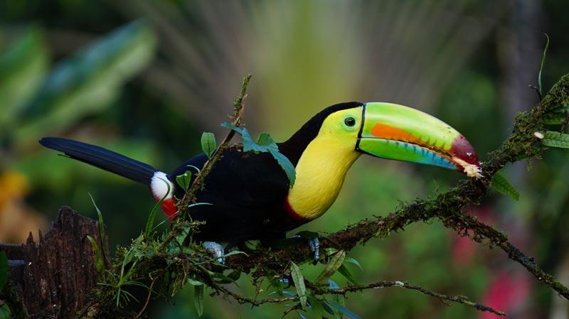 Costa Rica - Excursions disponibles