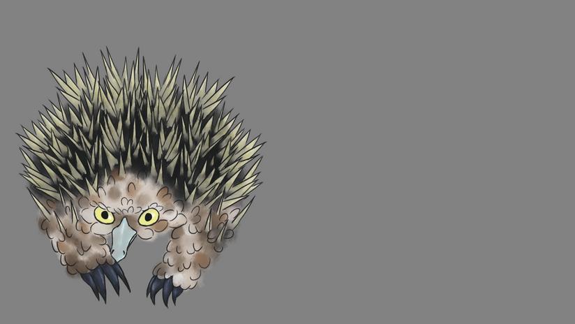 Echidna Burrowing Owl