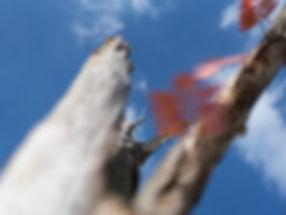 4.Wreath to Armor.jpg
