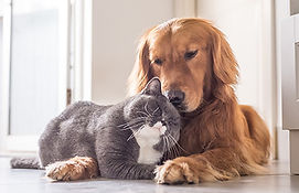 Cat and Dog cute 450 wide.jpg