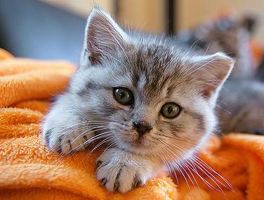Kitten on fleece 550 wide.jpg