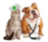 Cat Dog Veterinarian.jpg