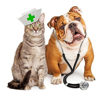 Cat nurse and dog doctor