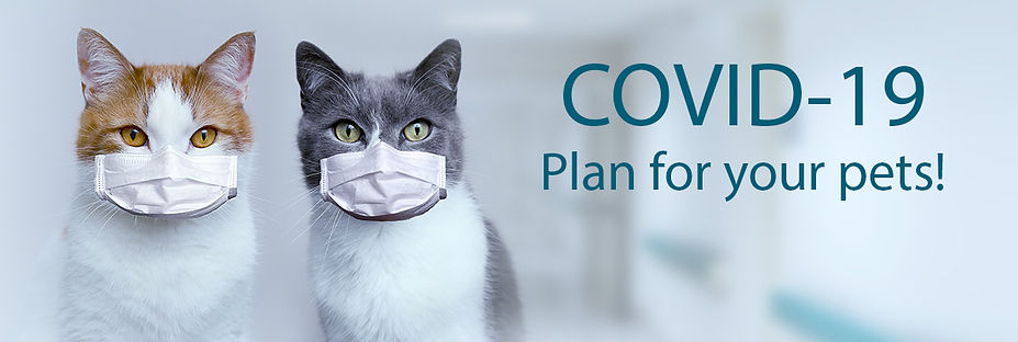 COVID19 Plan for your pets.jpg