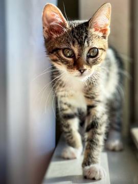 Kitten in a foster home